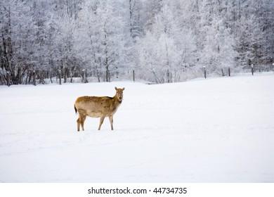 Winter landscape with a deer