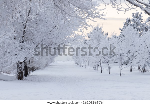 Winter landscape - a deserted winter alley in a winter park