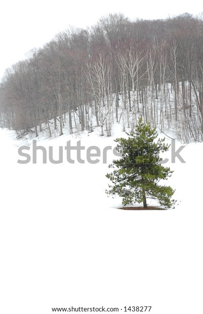 Winter landscape during snowfall with standalone pine tree