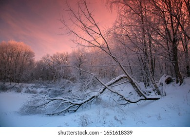 Winter landscape, early in the morning in the woods