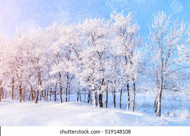 Winter landscape with falling snow - wonderland forest with snowfall and sunlight over winter grove. Snowy scene with Christmas and New Year mood