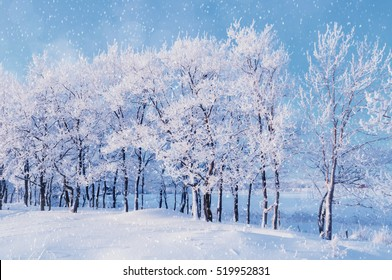 Winter landscape with falling snowflakes -  forest trees under evening snowfall and soft sunlight over forest grove