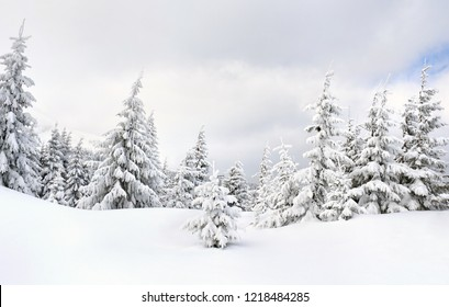 Winter landscape in fir forest and glade in snow