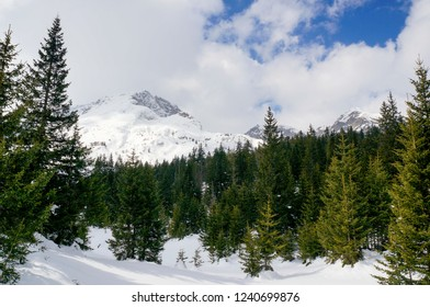 Winter landscape of a fir tree forest covered in beautiful powder snow with Bobotov Kuk mountain peak  in the background. Durmitor National Park, Montenegro.