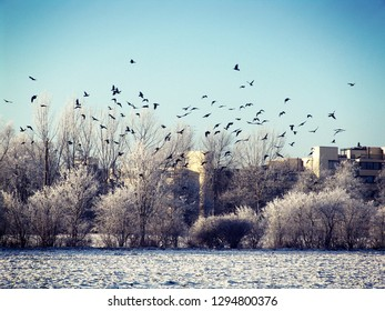 winter landscape, a flock of birds fly over a city park in a residential quarter, with frozen lawn and trees