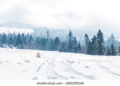 Winter landscape with fog and spruce forest