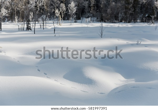 winter landscape footprints in the snow