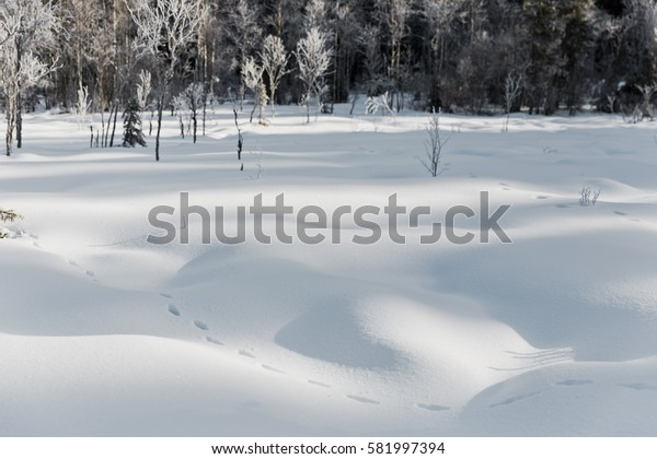 winter landscape footprints in the snow