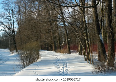 Winter landscape. Footprints in the snow along the shore of a frozen pond, blue shadows on the snow. Clouds in the blue sky. Russia, St. Petersburg, the park