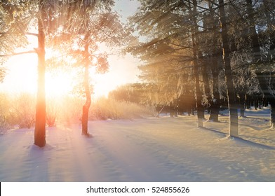 Winter landscape - forest winter nature under bright evening sunlight with frosty trees