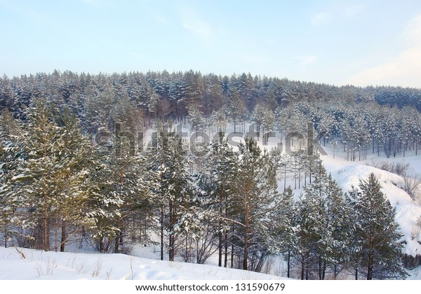winter-landscape-forest-pines-on-600w-13