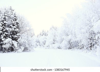 winter landscape in the forest / snowy weather in January, beautiful landscape in the snowy forest, a trip to the north