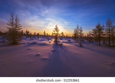 Winter landscape with forest, sun and snow. Pink and violet.