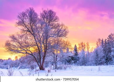 winter landscape with forest, trees and sunrise. winterly morning of a new day. purple winter landscape with sunset
