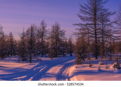 Winter landscape with forest, trees, sunset. Tone.