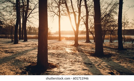 Winter landscape - frosty forest in the sunny evening. Tranquil winter nature in sunlight.