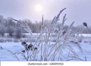 Winter landscape in a frosty snowy day. Hoarfrost on grass
