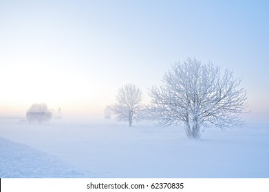 Winter landscape of frosty trees on foggy background