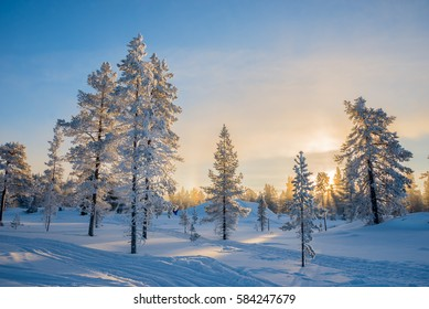 Winter landscape, Frosty trees in snowy forest at sunrise in Lapland, Finland
