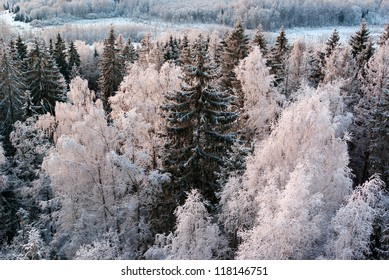 winter landscape with frosty treetops in sunset light