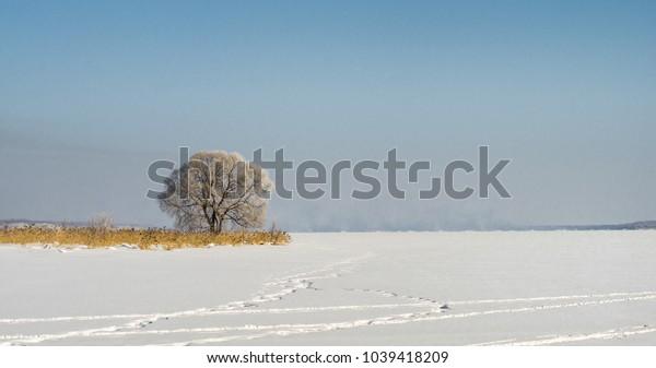 Winter landscape of a frozen tree lit by the sun