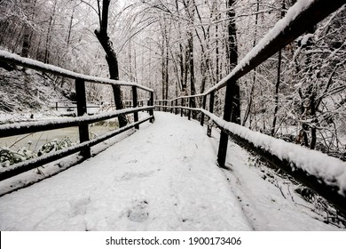 Winter landscape fully covered with fresh snow