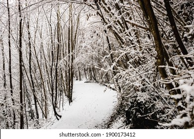 Winter landscape fully covered with fresh snow in the middle of the forest