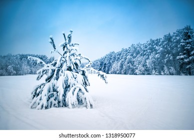 Winter landscape. Fur tree in the snow against the forest.
