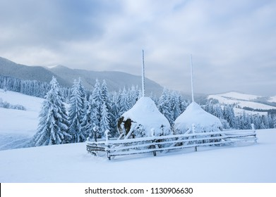 Winter landscape with haystacks in the snow. Mountain village after snowfall