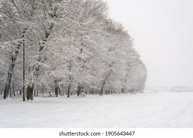 Winter landscape. Heavy snowfall in the park. Silhouettes of large beautiful trees with falling snow.