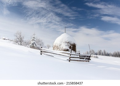 Winter landscape with high spruces and snow at dawn in mountains Carpathians, Ukraine