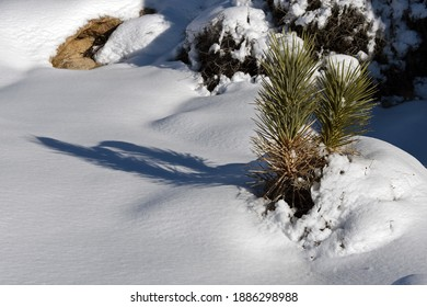 Winter landscape in Joshua Tree National Park with snow