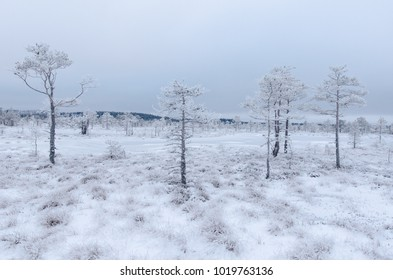 Winter landscape of Konnu-Suursoo Bog in Korvemaa, Estonia. Frost-covered bog and pine trees.