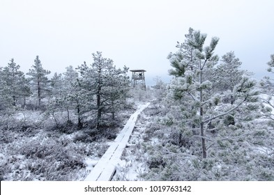 Winter landscape of Konnu-Suursoo Bog in Korvemaa, Estonia. Frost-covered bog and trees with broadwalk and viewtower