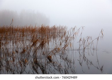 Winter landscape - lake, reed, fog