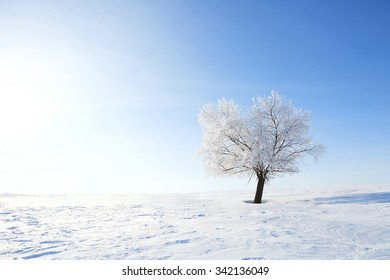 Winter landscape with lonely tree and snow field. Alone frozen tree in winter snowy field. Frosty winter day - snowy branch.