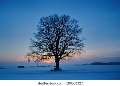 Winter  landscape, lonely tree, sunset background