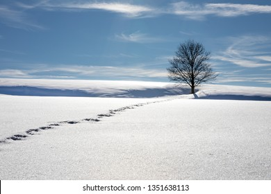 Winter landscape with a lonely tree and tracks in snow in in Bavaria, Germany. Single tree without leaves in sunny, snowy Alps.