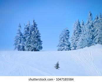 Winter Landscape in Madaras, Harghita, Romania
