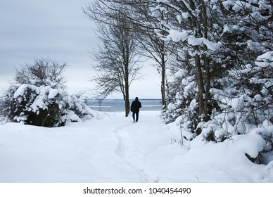 Winter landscape with a man walking to the sea on a footpath surrounded with snow covered trees