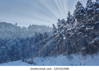 Winter landscape with morning sun rays through a snowy fir tree forest in Piatra Mare mountain, Brasov county, Romania