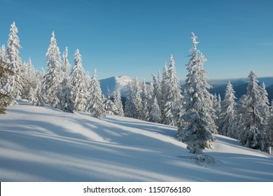Winter landscape of a mountain forest. Clear blue sky over the forest. Fir-trees covered with snow throw shadows on a snowy valley. Mountain range at the background.