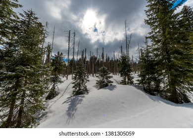 Winter landscape in National park Sumava near vilage Modrava. Cloudy day in March. South Bohemia, Czech republic, Europe.