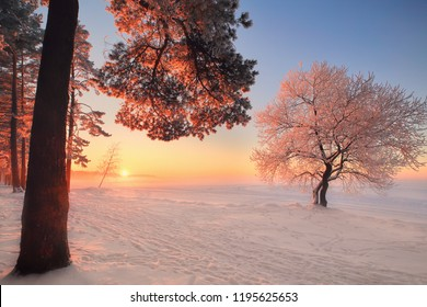 Winter landscape. Winter nature in park. Beautiful winter sunset with frosty trees illuminated by pink sunlight. Christmas background. Christmas evening with wonderful sunlight.