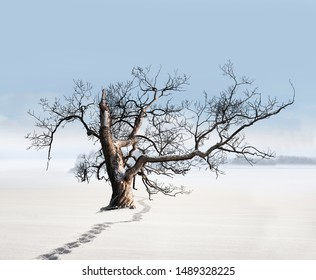 Winter landscape with old bare willow tree in empty field with blue sky, with footprints