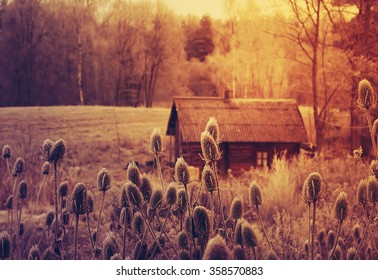 Winter landscape with old rural bathhouse and teasel plants.