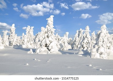 Winter Landscape on Brocken Mountain in Harz National Park,Saxony-Anhalt,Germany