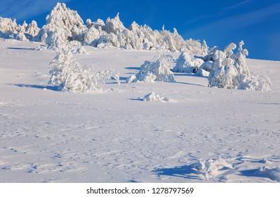 Winter landscape on a mountain top. Trees in the snow. Mountain peak, blue sky and winter sun. Mountain Ai-Petri. Crimea.