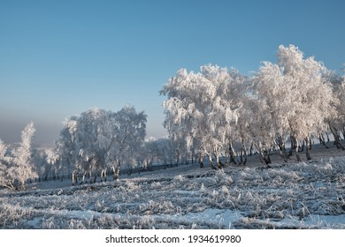 winter landscape on the slope of mountains with snow birches