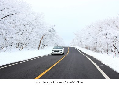 """It is a winter landscape on the way to """"Hallasan Mountain"""" in Jeju."""